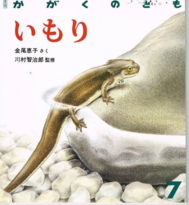 いもり かがくのとも 通巻220号 (1987年7月号)