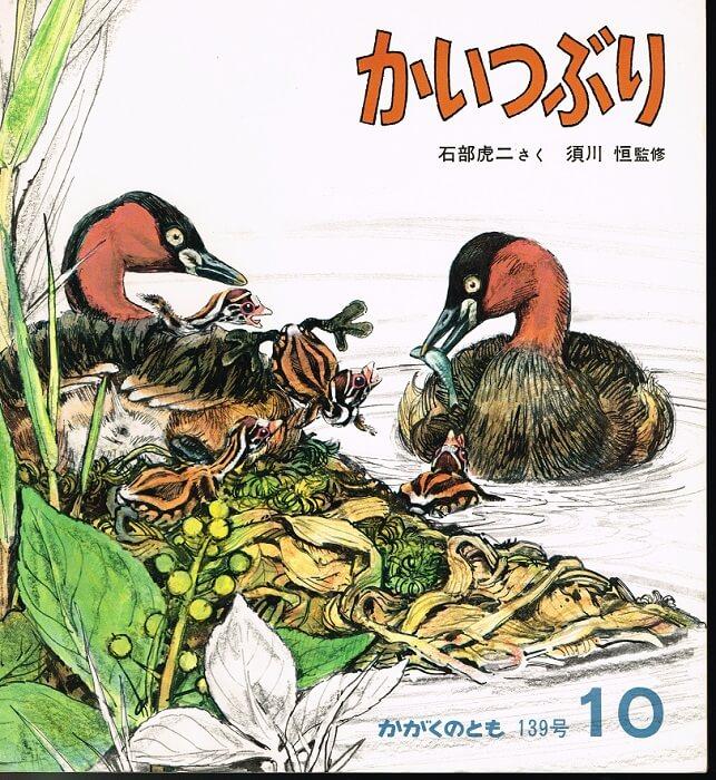 かいつぶり かがくのとも 通巻139号 (1980年10月号)