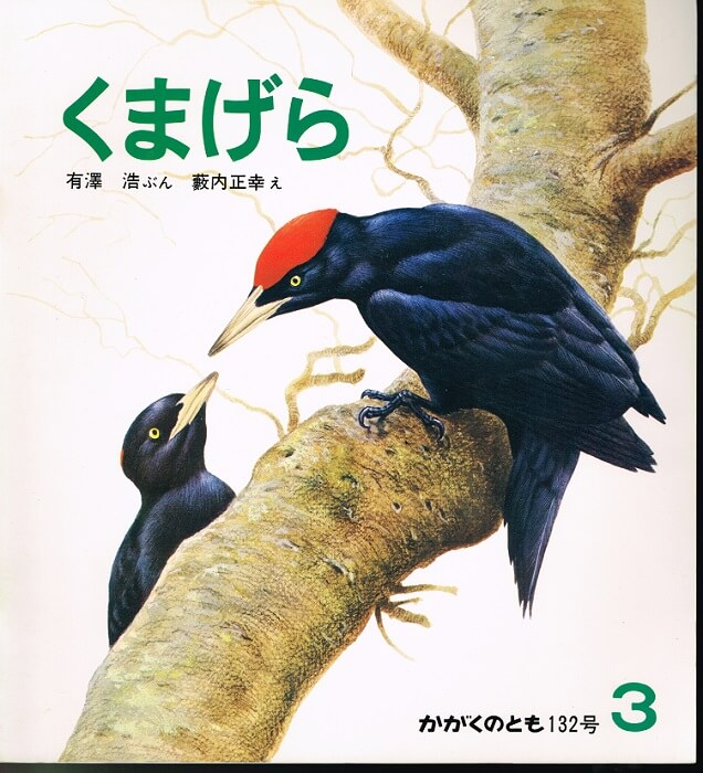 くまげら かがくのとも 通巻132号 (1980年3月号)